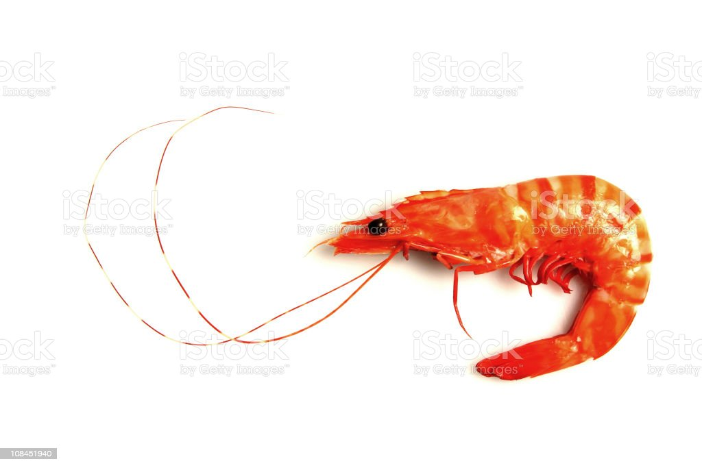 Isolated shrimp royalty-free stock photo