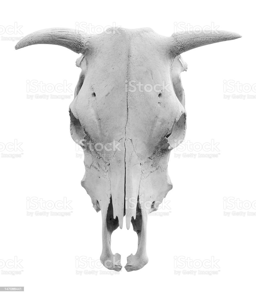 Isolated Skull stock photo