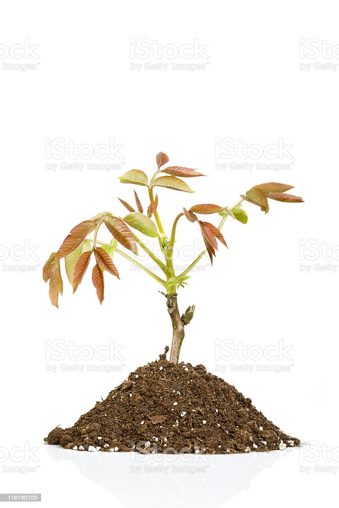 Isolated small plant stock photo