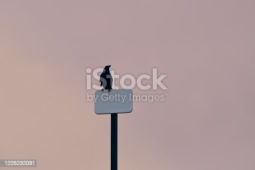 1129542015 istock photo Isolated space for your message 1225232031
