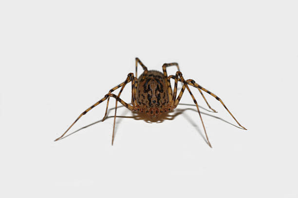 Isolated spider on light grey  ensnare stock pictures, royalty-free photos & images