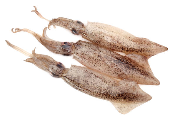 Isolated Squid seafood on white background Isolated Squid seafood on white background cuttlefish stock pictures, royalty-free photos & images