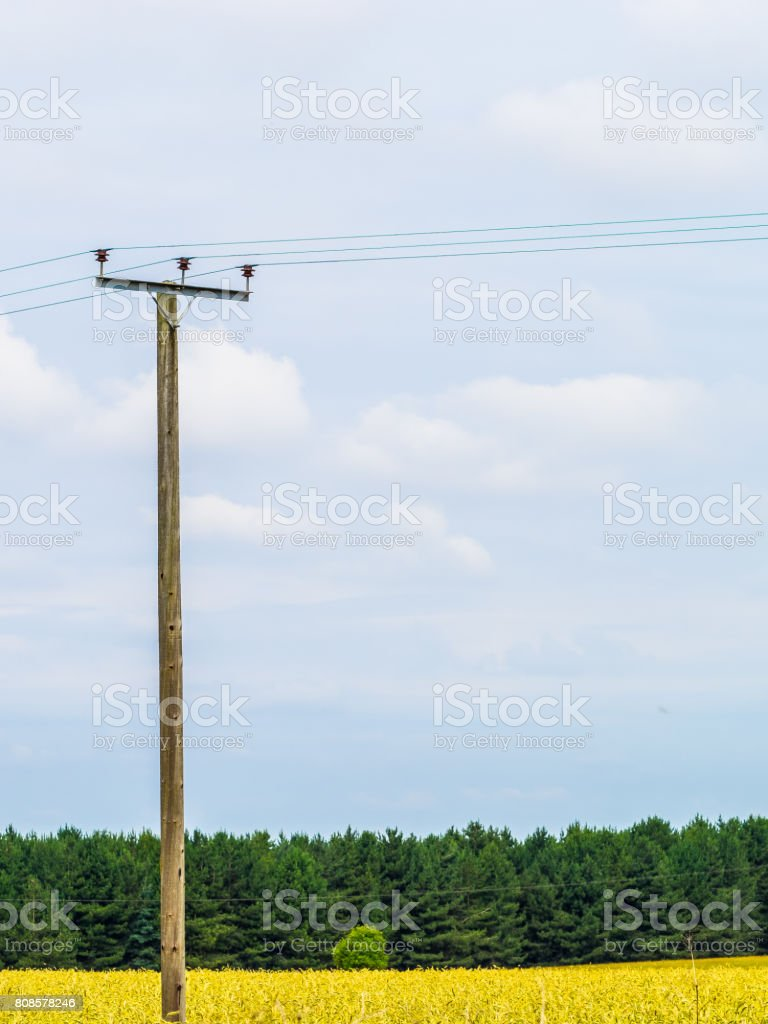 Isolated telephone pole in cereal Crop field stock photo