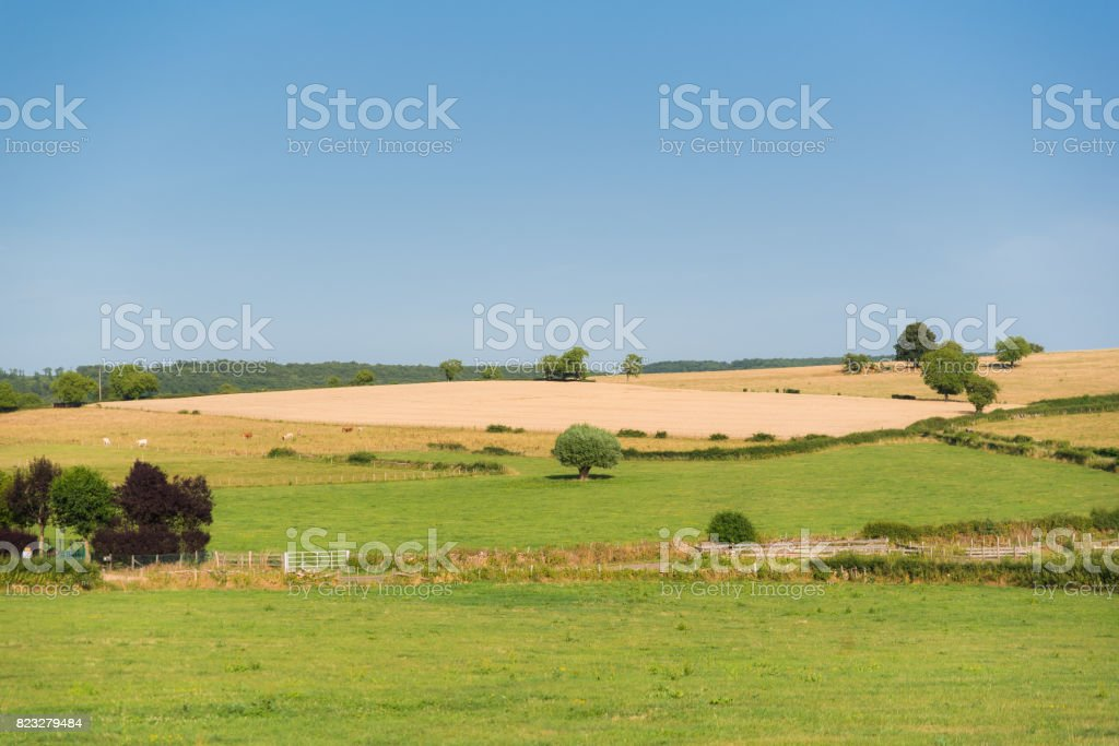 Isolated tree in a field stock photo
