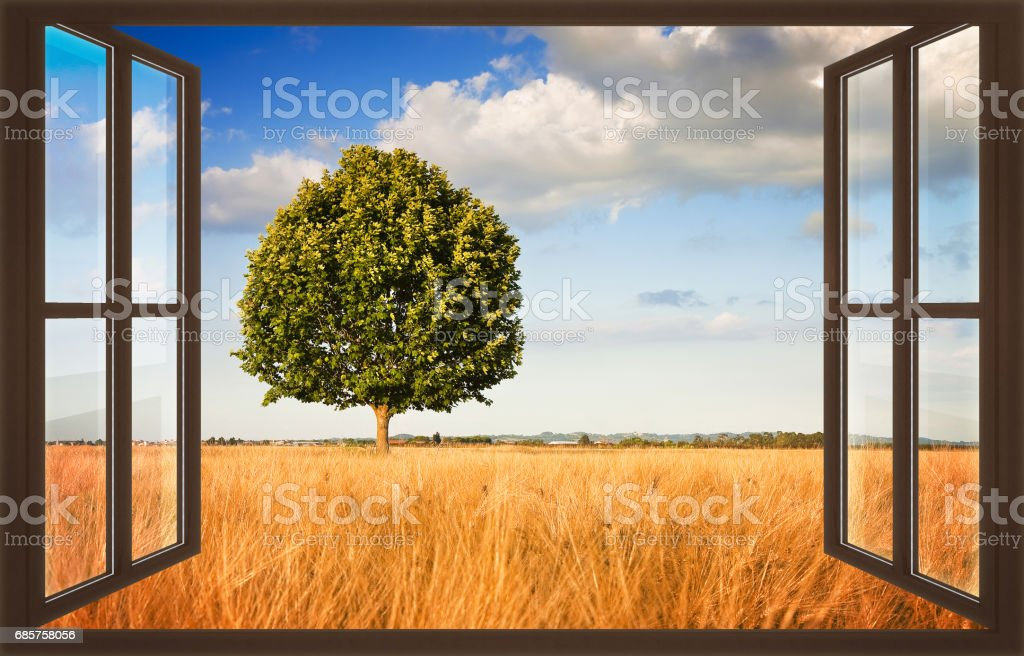 Isolated tree in a tuscany wheatfield view from the window - concept image with copy space stock photo