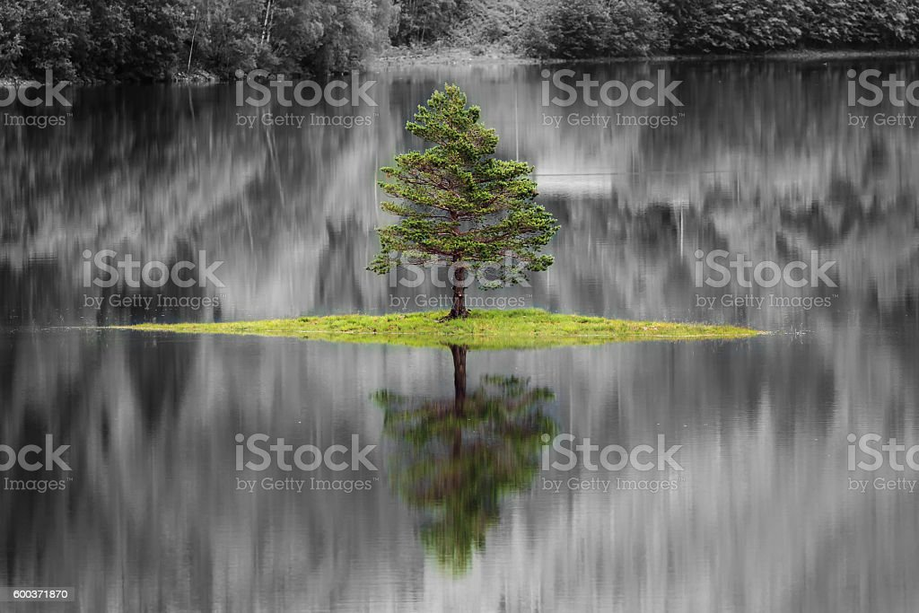 Isolated tree on a lake in Norway stock photo