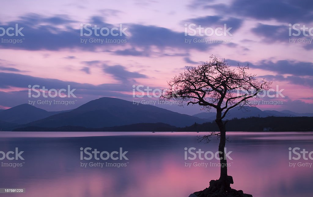 Isolated tree on Milarrochy Bay, Loch Lomond at Sunset royalty-free stock photo