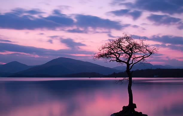 Isolated tree on Milarrochy Bay, Loch Lomond at Sunset stock photo