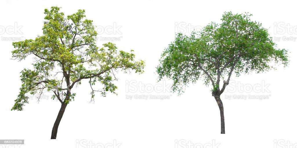Isolierte Baum auf weißem Hintergrund. Lizenzfreies stock-foto