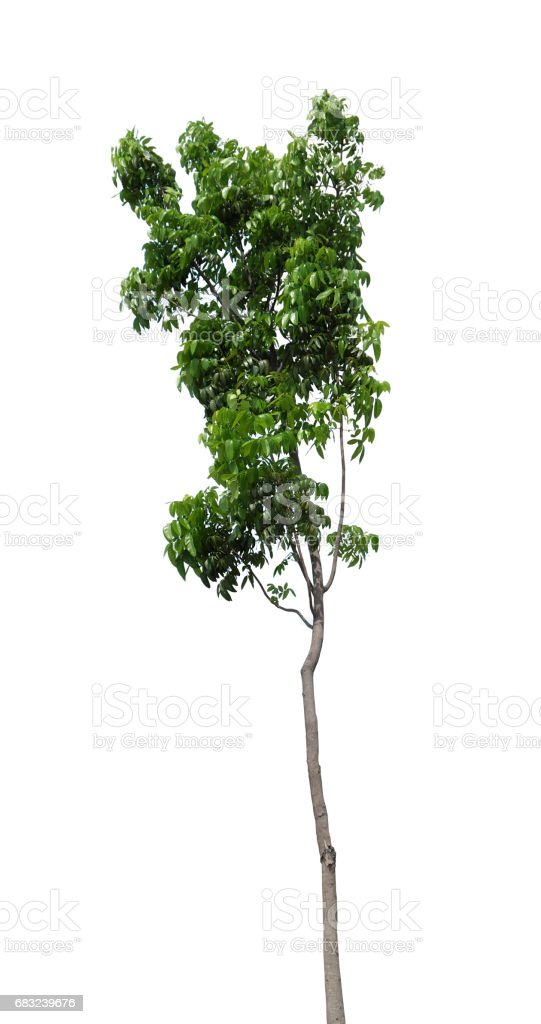 isolated tree royalty-free 스톡 사진