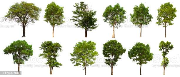 Photo of isolated tree set is located on a white background. Collection of isolated tree on white background