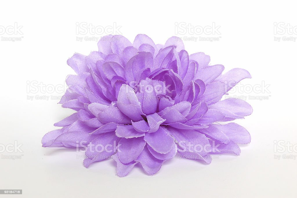 Isolated violet stock photo