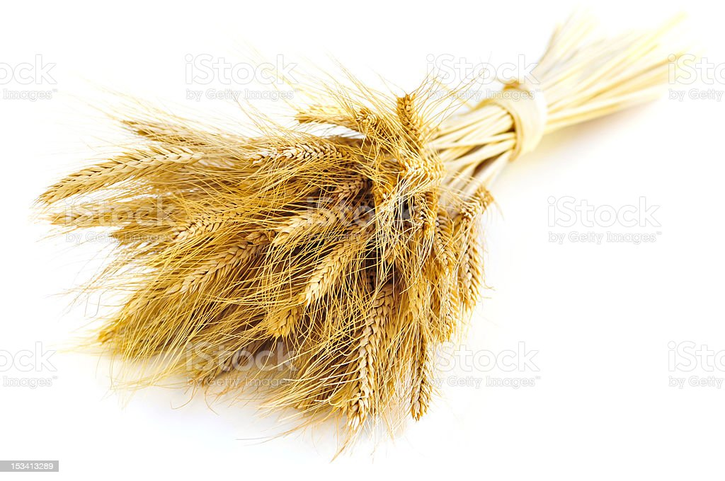 Isolated wheat ears royalty-free stock photo
