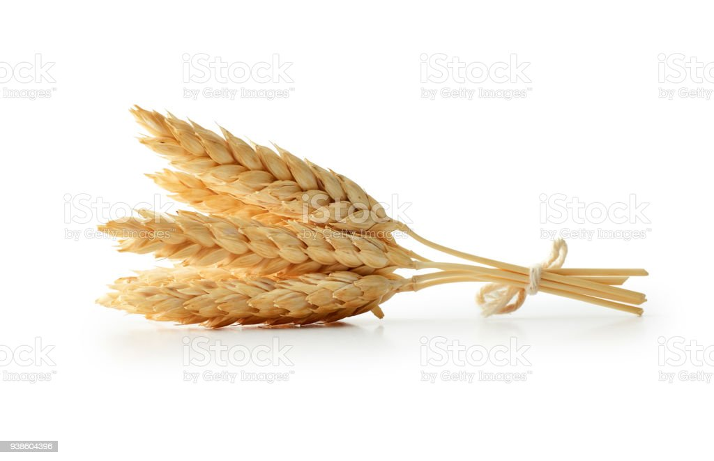 Isolated wheat stock photo