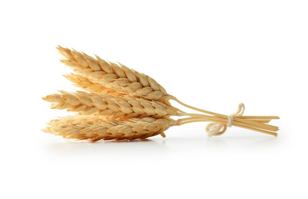 isolated wheat - barley stock pictures, royalty-free photos & images