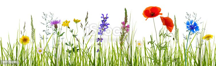 istock isolated wildflower meadow 997750962