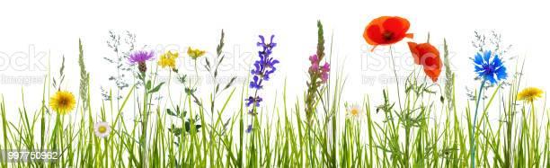 Isolated wildflower meadow picture id997750962?b=1&k=6&m=997750962&s=612x612&h=38cfi2vecwjoci4td8tvo3xenu87pbbz13vx pc27pa=