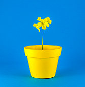 Isolated yellow flowers and flowerpot on colored background
