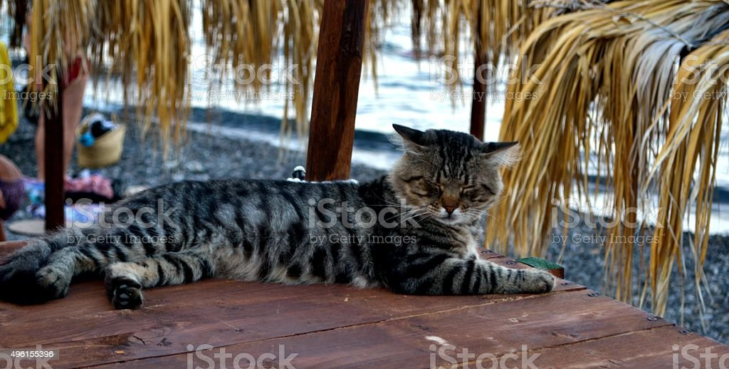 Isole Eolie, Lipari. Cat on the beach stock photo
