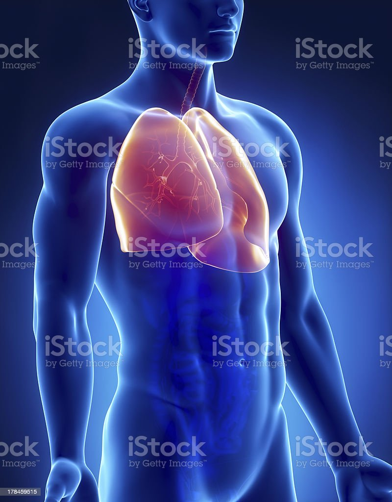 Isometric view of male lungs inside body royalty-free stock photo