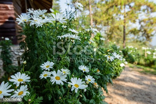 istock Israel, Beauty, Beauty In Nature, Blossom, Close-up 1209235560