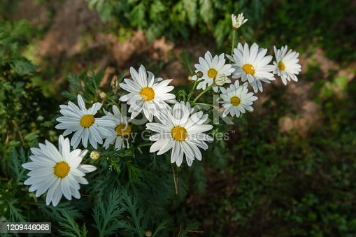 istock Israel, Beauty, Beauty In Nature, Blossom, Close-up 1209446068