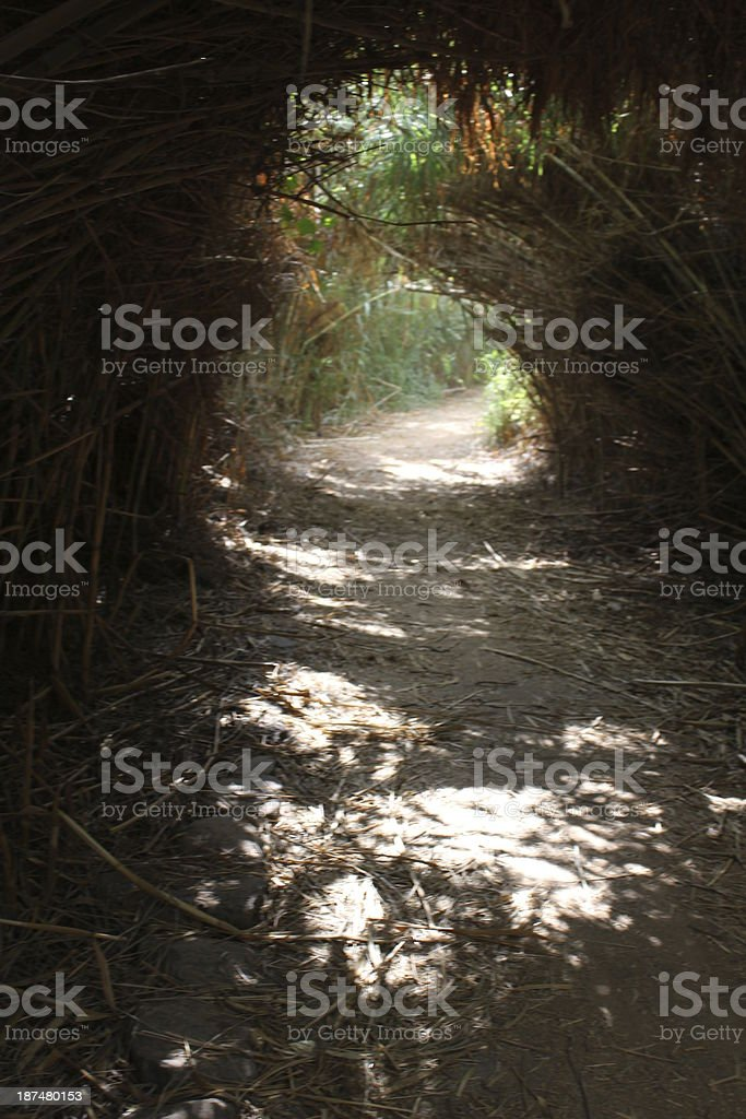 Israel Nature path with Giant reeds stock photo