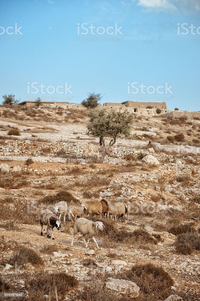 Israel stock photo