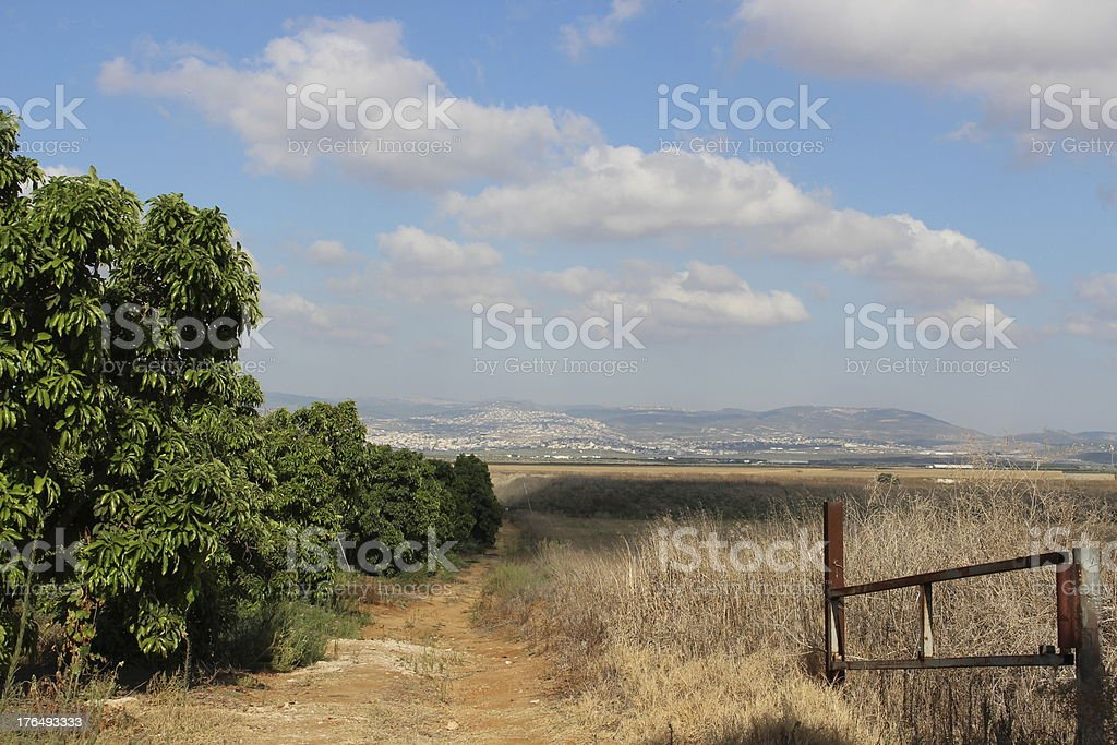 Israel summer in Western Galillee royalty-free stock photo