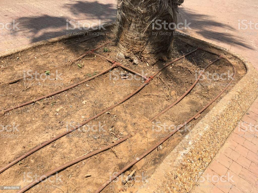 Israel tropical drip irrigation royalty-free stock photo