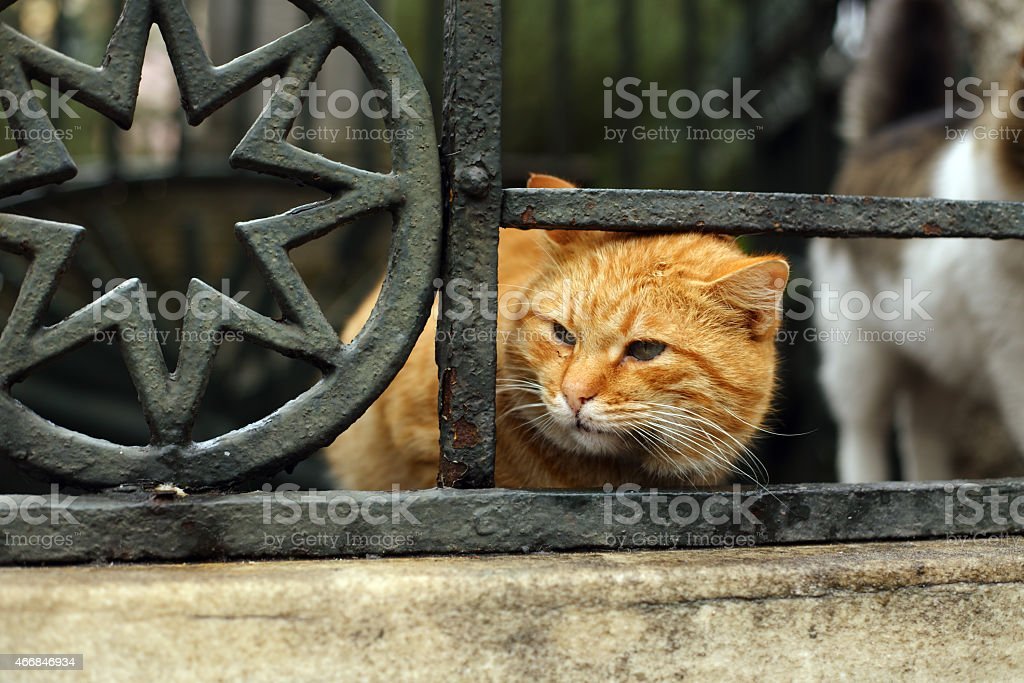 Istanbul alley cat stock photo