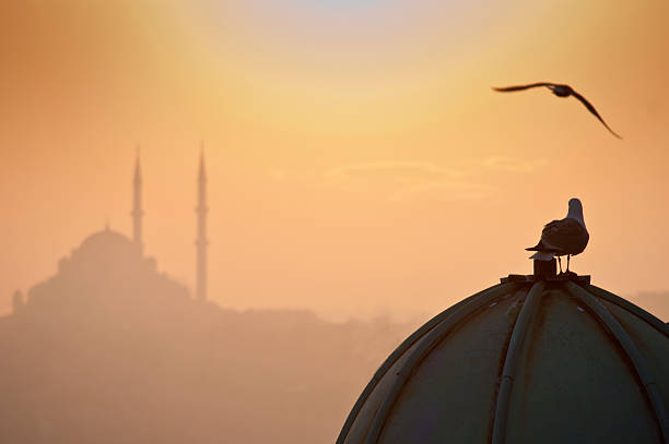 Istanbul and Freedom stock photo