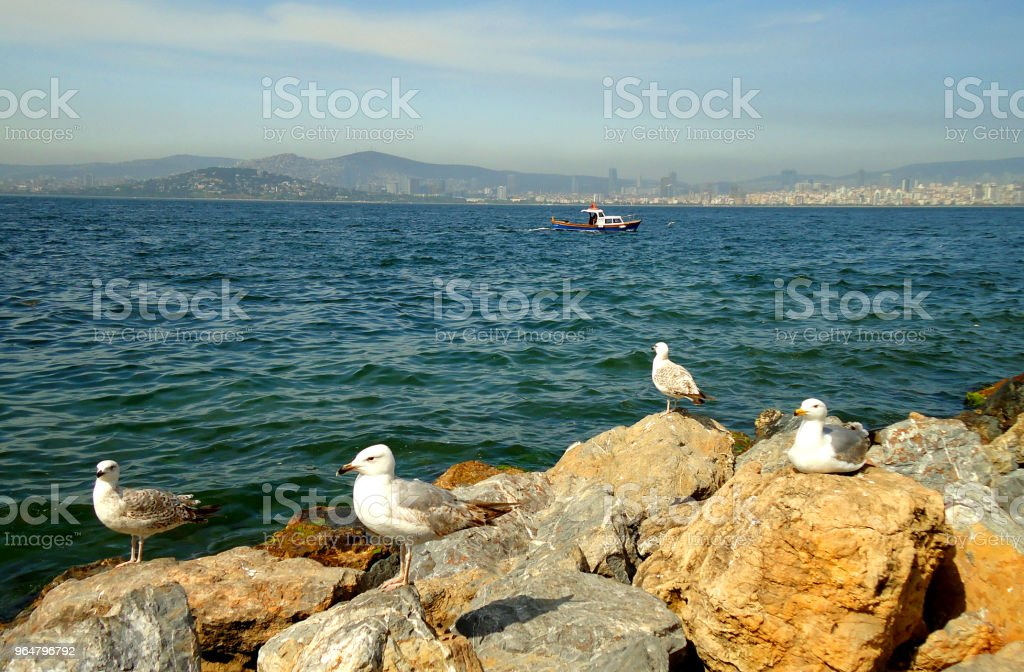 Istanbul Buyukada sea coast royalty-free stock photo