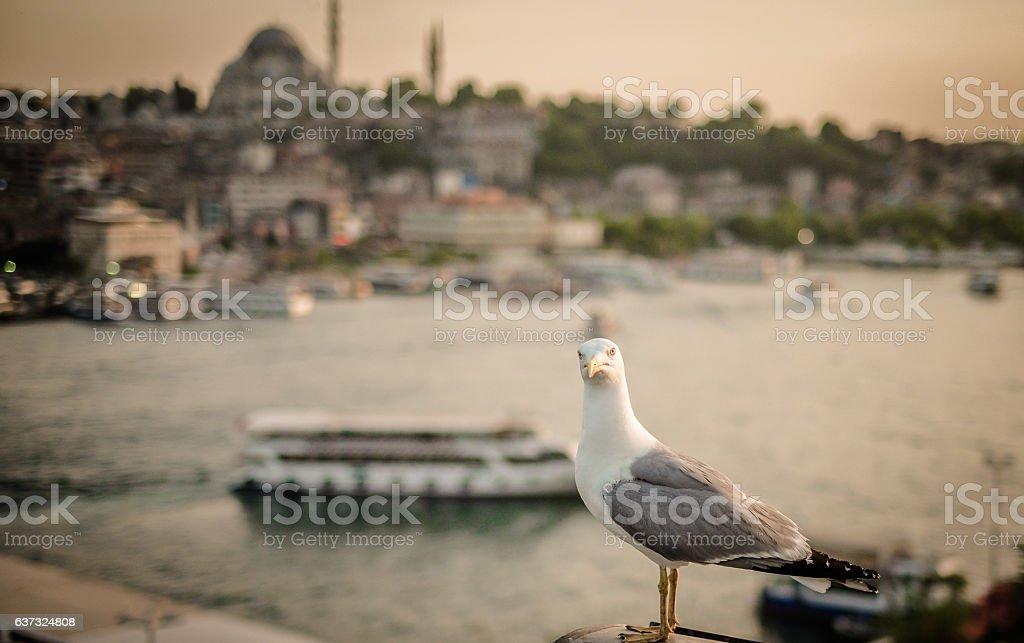 istanbul, gull stock photo