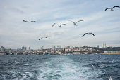 Istanbul scape from ferryboat and seagulls are flying
