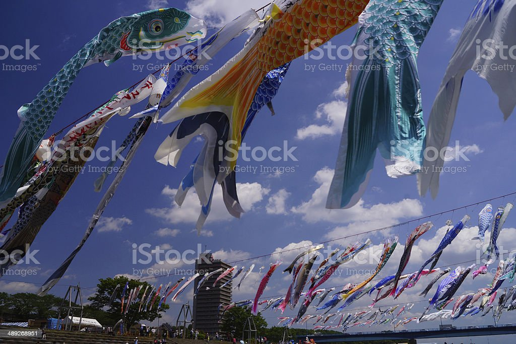 It can swim and is a carp streamer Sagami river stock photo
