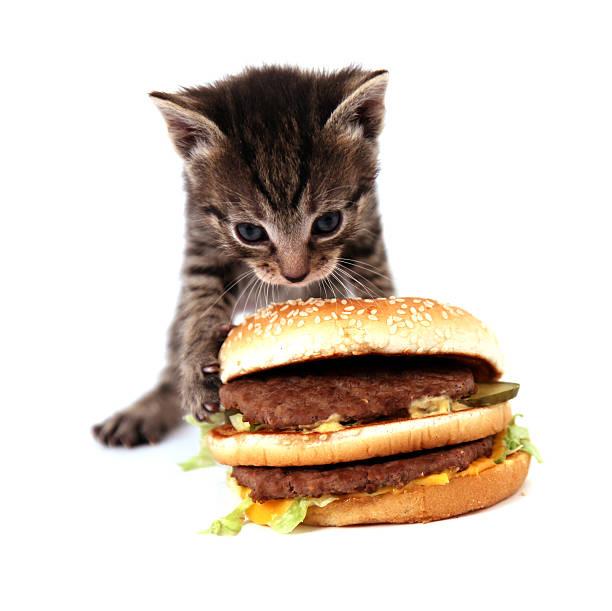 It is my dinner picture id182211276?b=1&k=6&m=182211276&s=612x612&w=0&h=h4urqzl6qibyss5etk7cd4 4jepflnifcjuy1 mfs50=