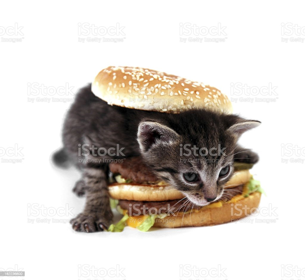 It is my dinner! royalty-free stock photo