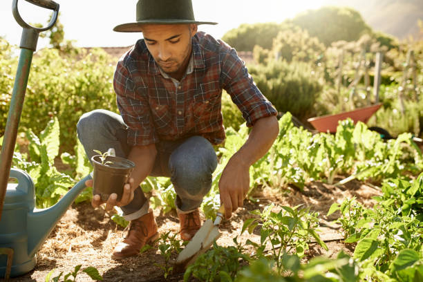 it takes hard work to maintain a farm - organic farm stock photos and pictures