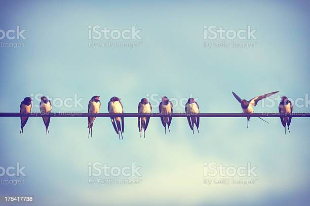 It takes more than a swallow to make summer picture id175417738?b=1&k=6&m=175417738&s=612x612&h=b fft g0xhkt6uslwnwqsssu9t3ctgyb7rbb82unksk=
