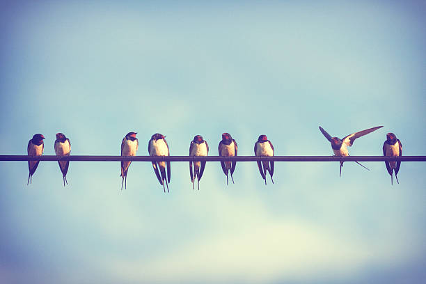 it takes more than a swallow to make  summer. - wire stock photos and pictures