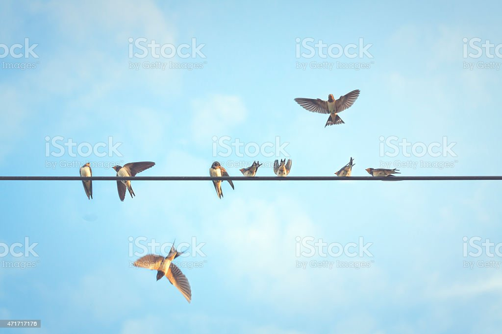 It takes more than a swallow to make  summer. stock photo