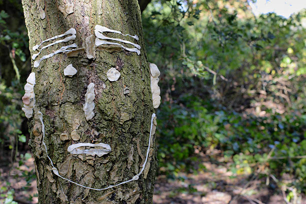 used chewing gum tree graffiti in nature park woodland - whiteway graffiti stock photos and pictures