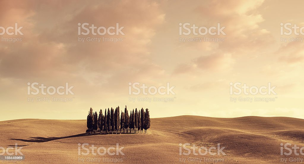 italian cypresses at sunset royalty-free stock photo