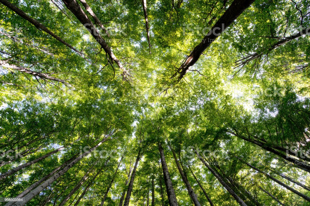 Italian forest view from below - foto stock