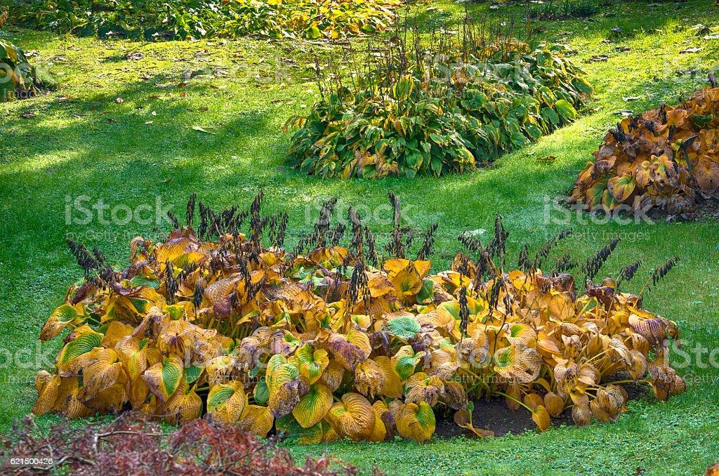 Italian garden in Autumn photo libre de droits