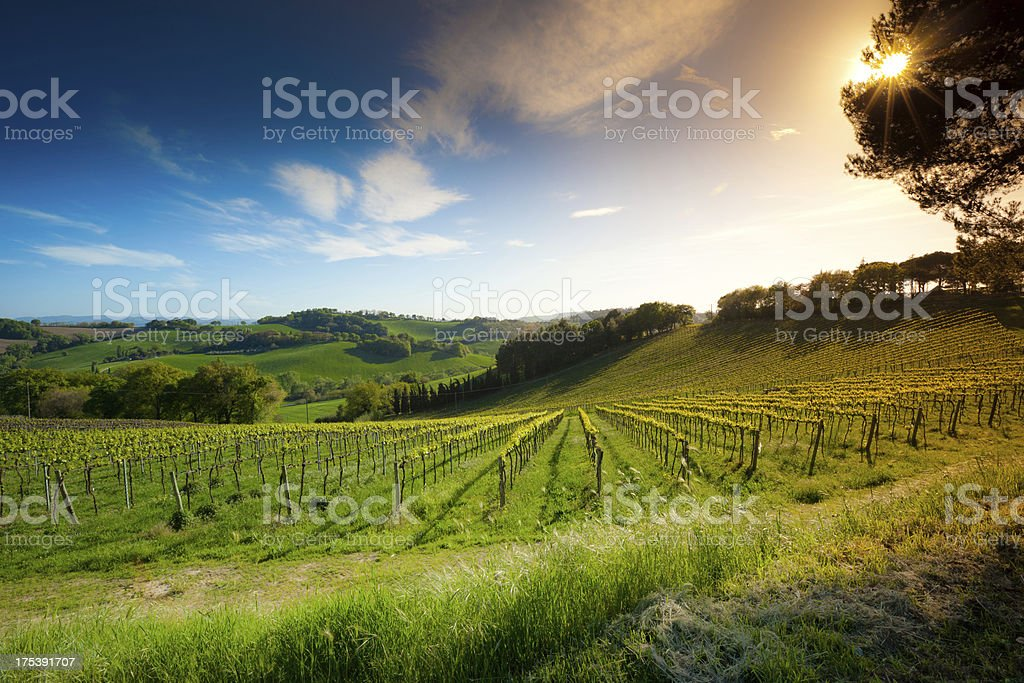 Italian Landscape royalty-free stock photo