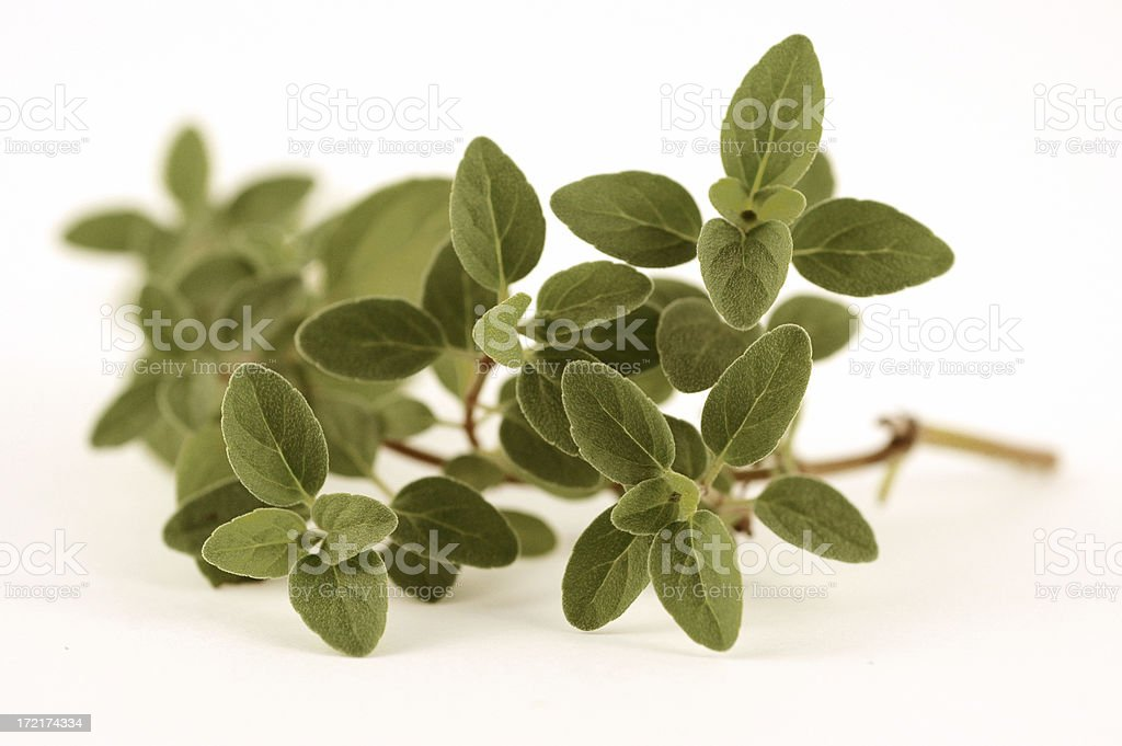 italian oregano stock photo