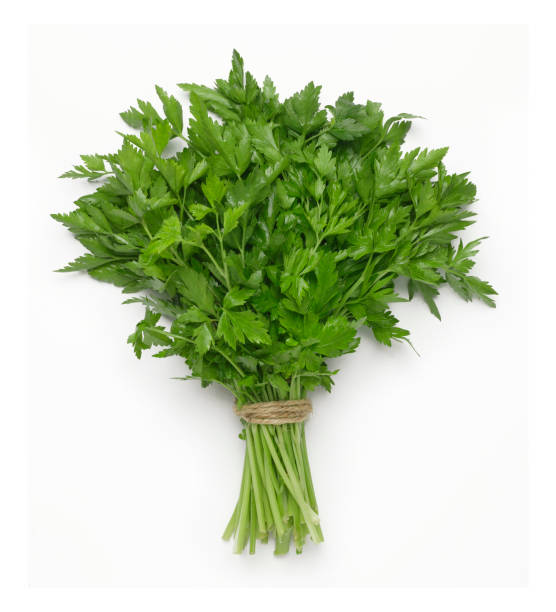 italian parsley - parsley stock photos and pictures