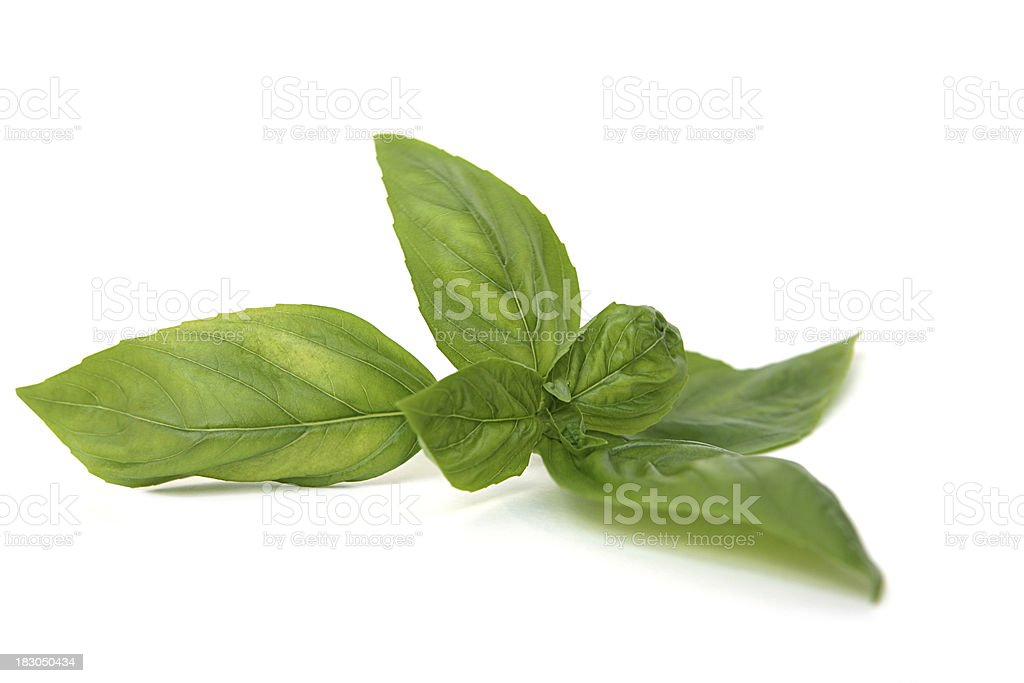 Italian Sweet Basil Isolated on White stock photo
